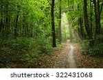forest with sunlight. the sun... | Shutterstock . vector #322431068