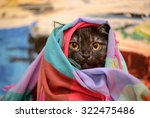 Stock photo funny cat 322475486