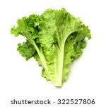 Salad Leaf. Lettuce Isolated O...