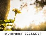 Small Flower Under Evening Sun...