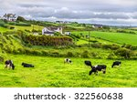 Herd Of Cows In Pasture In...