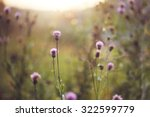 Wild Meadow Pink Flowers In...