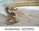 Rattle Snake By Bleached Out Log