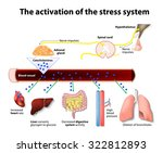 activation of the stress system | Shutterstock . vector #322812893