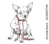 chihuahua dog pencil drawing | Shutterstock . vector #322850744