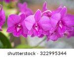 bright purple wild orchid...   Shutterstock . vector #322995344