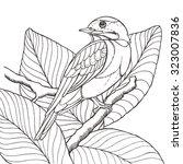 Sketch Of Tropical Bird Sittin...
