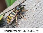 Wasp. Large Wasp. Dangerous Fl...