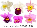 colorful orchid isolated on... | Shutterstock . vector #323091254