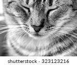 Cat Portrait Close Up In Black...