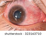 close up of the... | Shutterstock . vector #323163710