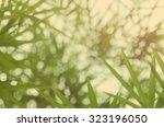 blur nature bamboo leaf bokeh... | Shutterstock . vector #323196050