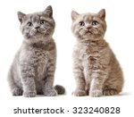 Stock photo two british short hair kittens isolated on white background 323240828