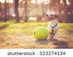Dog Sitting With Big Ball At...