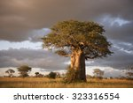 beautiful baobab trees at... | Shutterstock . vector #323316554