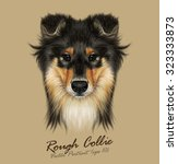 Stock vector vector illustrative portrait of collie dog cute face of mahogany sable rough collie or shetland 323333873