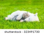 Sleeping White Swiss Shepherd ...