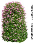bush with flowers on isolated... | Shutterstock . vector #323505383