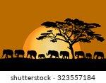 herd of african elephants... | Shutterstock .eps vector #323557184