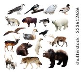 set of european animals.... | Shutterstock . vector #323612636