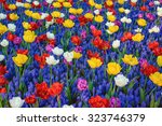 Different Kinds Of Tulips Amon...