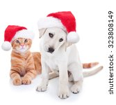 Stock photo cute christmas pet labrador puppy dog and xmas animal kitten cat in santa hats on white 323808149