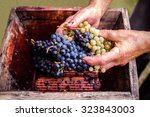 person putting grapes in old... | Shutterstock . vector #323843003