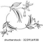 vanilla | Shutterstock .eps vector #323916938