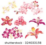 Vector Set Of Different Flower...