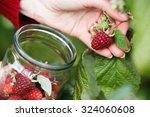 raspberry picking. woman... | Shutterstock . vector #324060608