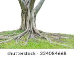 roots of a tree isolated on... | Shutterstock . vector #324084668