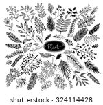 set of hand drawn branches. ink ... | Shutterstock .eps vector #324114428