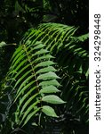 Small photo of Details of a leaf of ailanthus altissima (tree of heaven), a very invasive plant