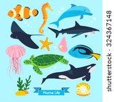 Marine Life Vector Design...