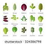 salad ingredients. leafy... | Shutterstock .eps vector #324386798