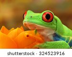 Portrait Of A Green Frog With...