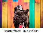Stock photo elegant french bulldog with necktie 324546434