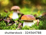 Small photo of Delicious porcini cep mushrooms in forest moss