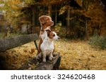 Stock photo dog breed nova scotia duck tolling retriever and jack russell terrier walking in autumn park 324620468