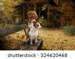 Dog Breed Nova Scotia Duck...