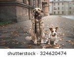Stock photo mixed breed dog and jack russell terrier walking in autumn park 324620474
