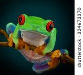Green Tree Frog With Orange...