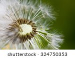 dandelion extremely close up ... | Shutterstock . vector #324750353