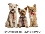 Stock photo group of dogs in front of a white background 324845990