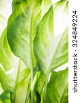 green leaves of a tropical... | Shutterstock . vector #324849224