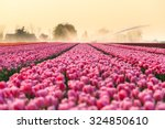 Beautiful Colored Tulip Fields...