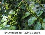 green coffee beans  green... | Shutterstock . vector #324861596