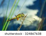Dragonflies  Insects  Animals ...
