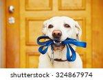 Labrador Retriever With Leash ...
