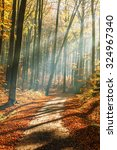 red and colorful autumn colors... | Shutterstock . vector #324967340